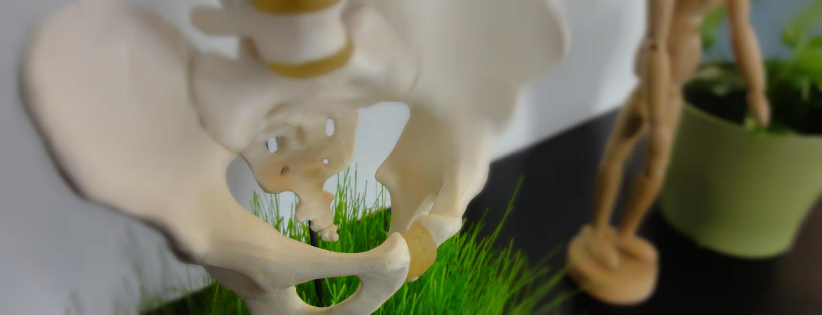 Colonne vertébrale et bassin dans le cabinet d'ostéopathie de Cébazat proche de gerzat, clermont-ferrand, blanzat et Riom - consultation Ostéopathe Basile Naegelen