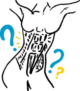 les abdominaux , leur role et leur anatomie